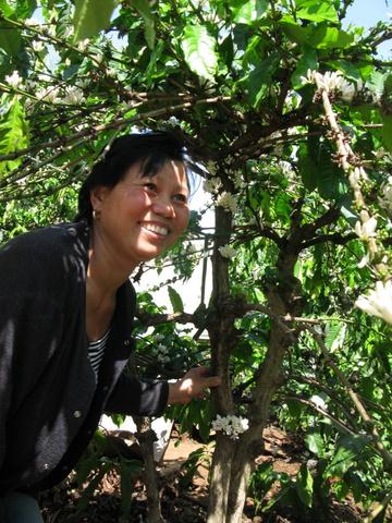 Người trồng cà phê đối diện với nhiều khó khăn