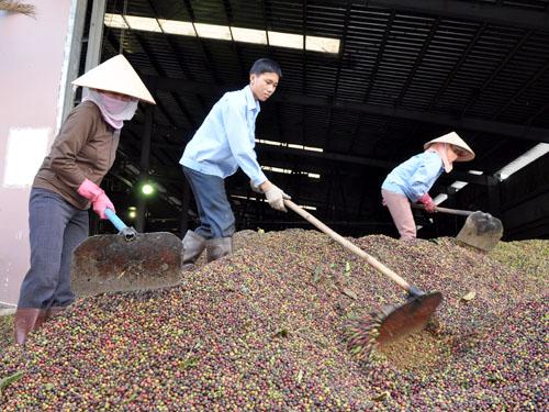 Từ ngày 7/6/2013, Thông tư 08/2013/TT-BCT chính thức có hiệu lực. Theo đó, các doanh nghiệp có vốn đầu tư nước ngoài (FDI) không được tổ chức mạng lưới mua gom hàng hóa tại Việt Nam để xuất khẩu.
