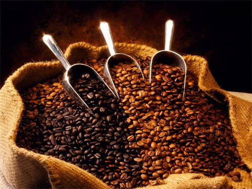 Vụ 2013 – 2014: Cà phê giảm sản lượng