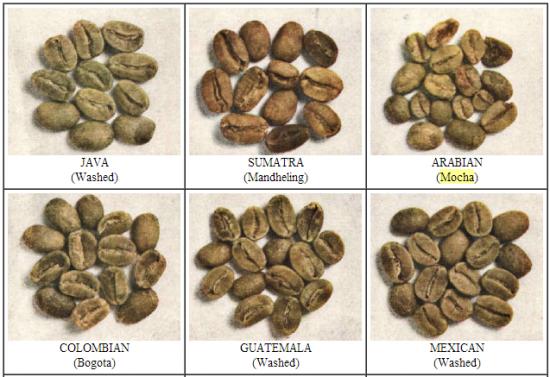 Hạt cà phê Mocha tại bản xứ Yemen, cũng tròn như con cháu của nó tại Cầu đất - Đà lạt