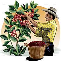 Chính sách mua hàng với nông dân