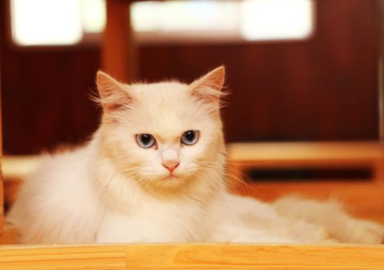 cafe-doremon-cat-quan-1