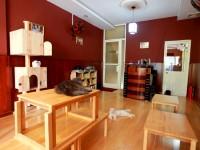 Cafe Doremon Cat: Quán cà phê của những người yêu mèo